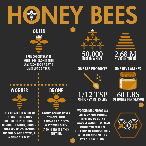 Honey Bees Infographic