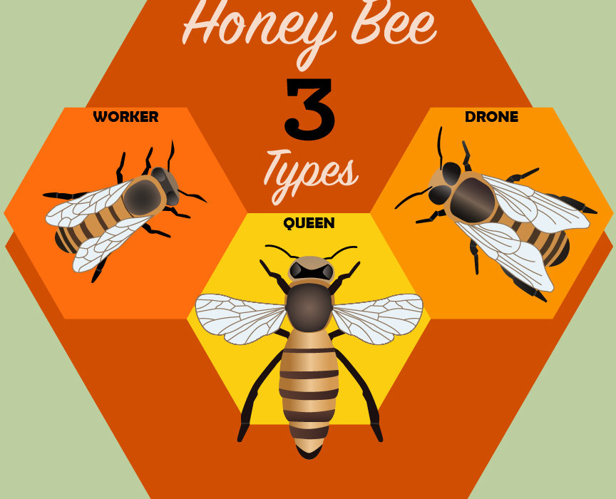 Types of honeybees